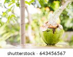 A Coconut Splash In The A...
