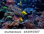 wonderful and beautiful... | Shutterstock . vector #643492507