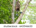 psarisomus dalhousiae  long... | Shutterstock . vector #643546633