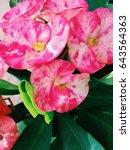 poppy at the garden.   Shutterstock . vector #643564363