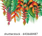 tropical plants and heliconia... | Shutterstock .eps vector #643668487