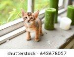 Stock photo abyssinian cute kitten on the windowsill 643678057