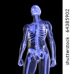 Skeleton, Transparent, Standing Tall - stock photo