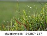 Dew Leaves Grass Grass Morning...
