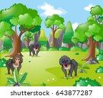 Baboon Monkeys In The Forest...