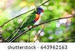 rainbow lorikeet hang on a... | Shutterstock . vector #643962163