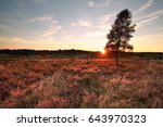purple sunset over heather... | Shutterstock . vector #643970323
