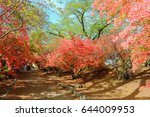the red azaleas of the park are ... | Shutterstock . vector #644009953