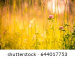 golden bright meadow field.... | Shutterstock . vector #644017753