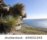 Small photo of View of biotope, Saunders Island, Falkland Islands-Malvinas