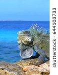 iguana lizard  small dragon  on ... | Shutterstock . vector #644103733