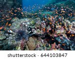 beautiful healthy coral reef... | Shutterstock . vector #644103847