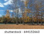 the picturesque autumn forest... | Shutterstock . vector #644152663