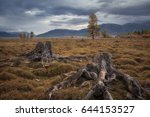 old stumps on a background of a ... | Shutterstock . vector #644153527