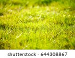 abstract natural background... | Shutterstock . vector #644308867