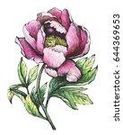 the branch flowering pink peony ...   Shutterstock . vector #644369653
