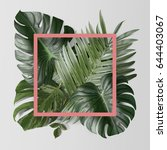palm leafs background concept   Shutterstock . vector #644403067