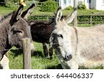 Two Donkeys Look And Stare...