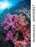 soft coral garden. similan...   Shutterstock . vector #644433817