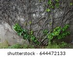 vine on wall | Shutterstock . vector #644472133