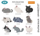 chinchilla breeds icon set flat ... | Shutterstock .eps vector #644482537