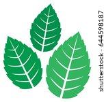 fresh mint leaves vector...   Shutterstock .eps vector #644598187