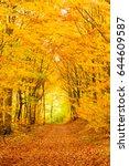 small trails in golden fall...   Shutterstock . vector #644609587