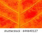 fallen leaf | Shutterstock . vector #644640127