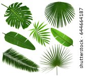 different tropical leaves on... | Shutterstock . vector #644664187