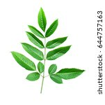 green leaf isolated on white... | Shutterstock . vector #644757163