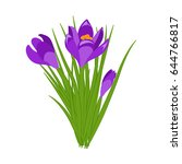three purple crocus blooming... | Shutterstock .eps vector #644766817