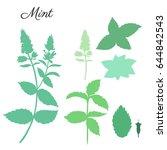 mint leaves  peppermint buds...   Shutterstock .eps vector #644842543