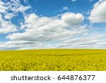 Large Field Planted With Yello...