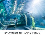 blurred aquarium tunnel... | Shutterstock . vector #644944573