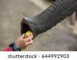 elephant feeding | Shutterstock . vector #644992903