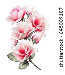 magnolia  watercolor flowers.... | Shutterstock . vector #645009187