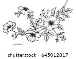 wild rose flowers drawing and... | Shutterstock .eps vector #645012817
