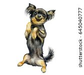 the toy terrier dog sits on its ... | Shutterstock . vector #645040777