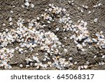 petals on the floor useful as a ... | Shutterstock . vector #645068317