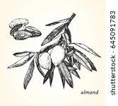 hand drawn illustration of... | Shutterstock .eps vector #645091783