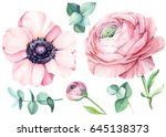 ranunculus and eucalyptus ... | Shutterstock . vector #645138373