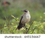 darwin's finches  galapagos   Shutterstock . vector #645156667