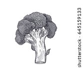broccoli. hand drawing of... | Shutterstock .eps vector #645159133