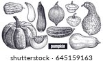 various of pumpkin. chayote ... | Shutterstock .eps vector #645159163