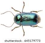 leaf beetle cryptocephalus... | Shutterstock . vector #645179773