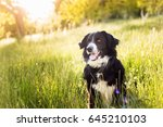 beautiful dog sitting in the...   Shutterstock . vector #645210103