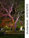 Small photo of CRIMEA, RUSSIA = Illuminated in different colors at night the giant platan (oriental plane or Platanus orientalis) of Isadora Duncan adorning the embankment of Yalta, South coast of Crimea.
