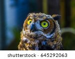 owl | Shutterstock . vector #645292063