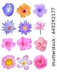 beautiful flower on white... | Shutterstock . vector #645292177