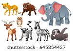 many wild animals on white... | Shutterstock .eps vector #645354427